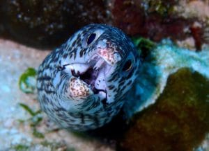 Cozumel in October and November: Spooky Spirits and Divine Diving
