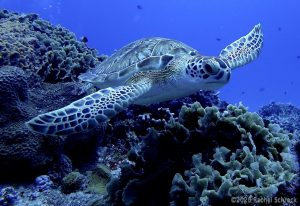 Sea Turtles in Cozumel: Your Full Guide