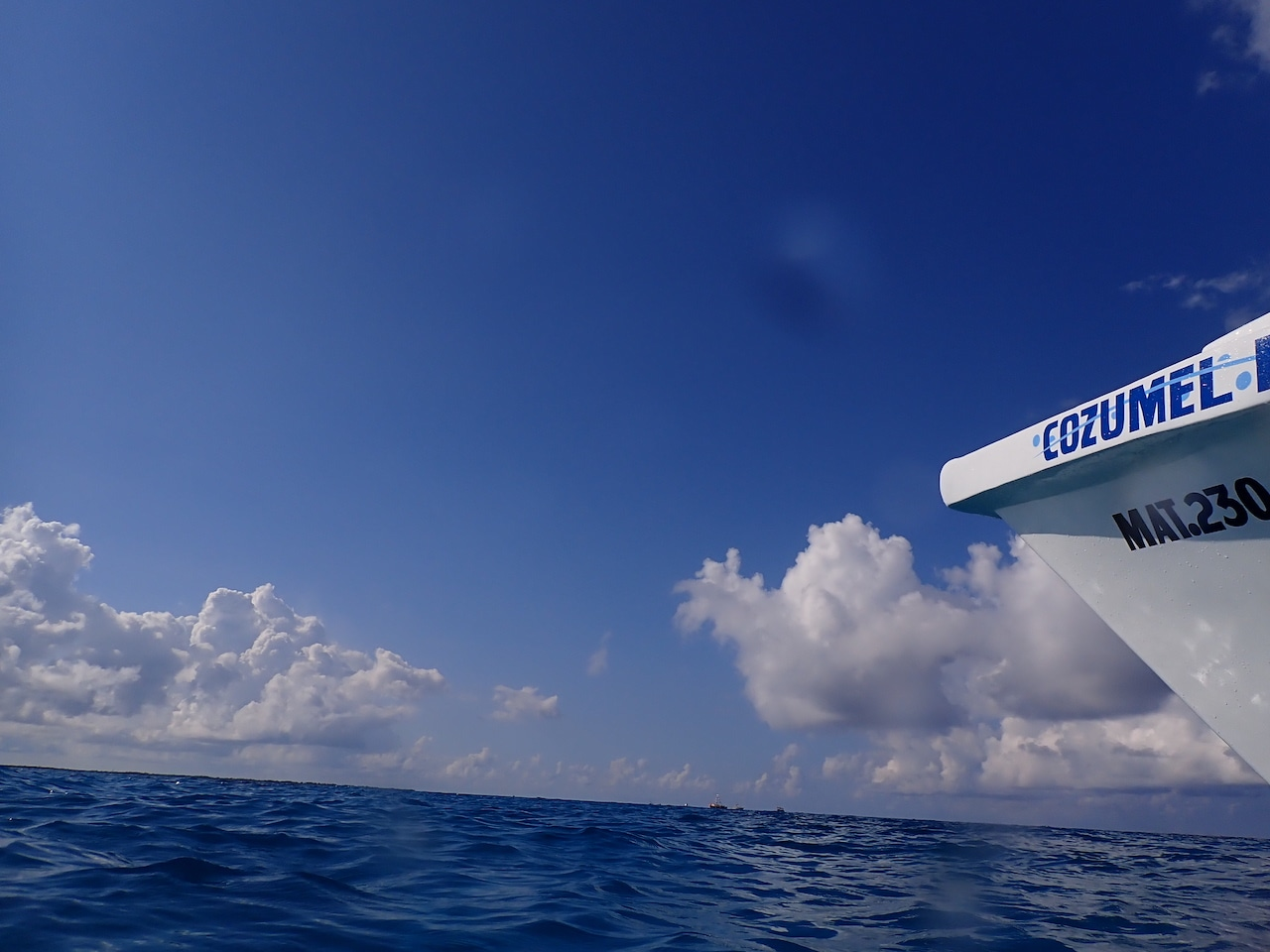 Scuba Diving in Cozumel: Fantastic Diving All Year Round