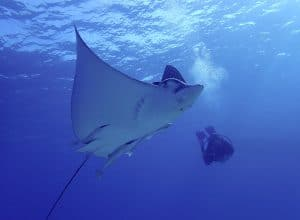 Read more about the article Scuba Diving in Cozumel: Fantastic All Year