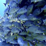 Cozumel Snorkeling for Newbies: Your Top FAQs Answered
